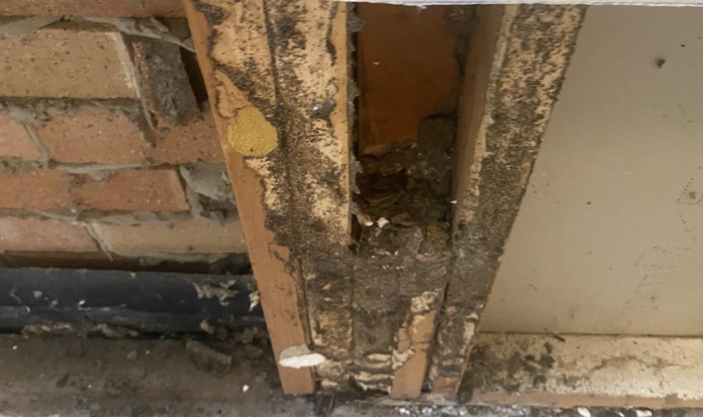 Termites Found